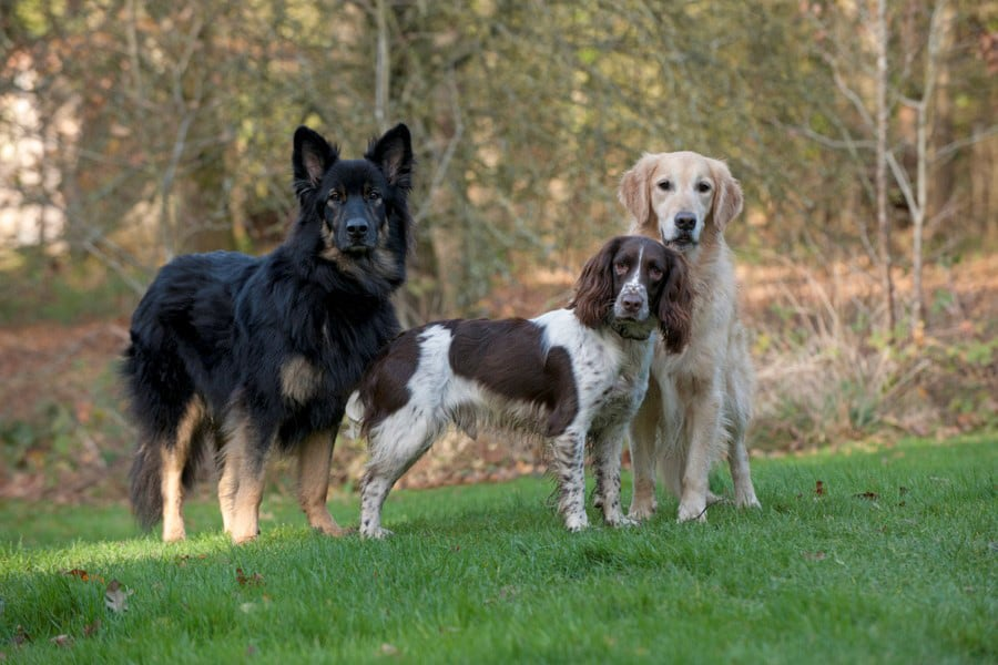 dog trainer Banstead Epsom Ewell Cheam Woodmanstern Coulsdon Purley Caterham Chessington Ewell 1