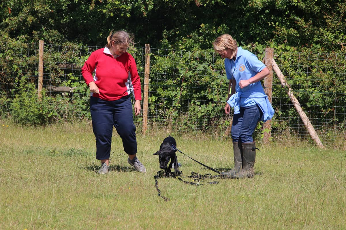121 dog training Banstead Epsom Ewell Cheam Woodmanstern Coulsdon Purley Caterham Chessington Ewell Surrey