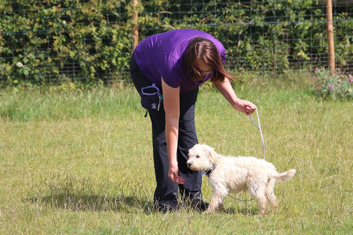 121 puppy training Banstead Epsom Ewell Cheam Woodmanstern Coulsdon Purley Caterham Chessington Ewell Surrey
