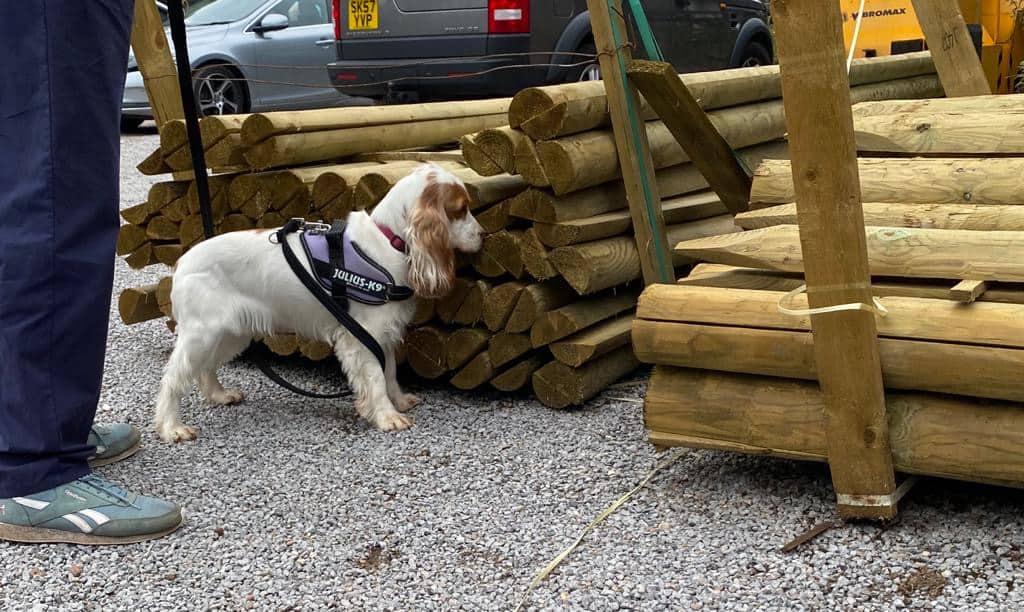 scentwork courses bracken dog training surrey