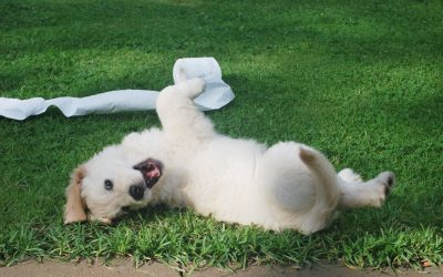 All your puppy socialisation questions answered