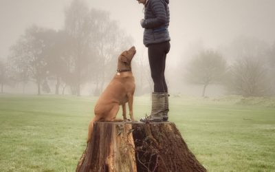 How Gundog training classes can help with dog's never ending energy