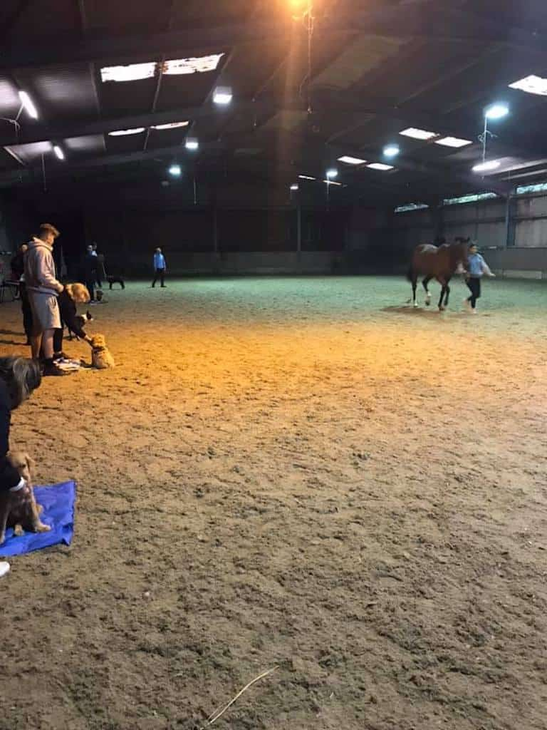 dog training class with horse
