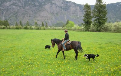 Your dog and livestock, wildlife and horses: How to keep everyone safe
