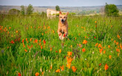 Recall dog training: Why does my dog ignore me when I call him?