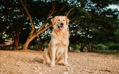 15 dog enrichment ideas your Gundog will love